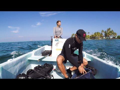 MarineGEO Field Campaign: Belize