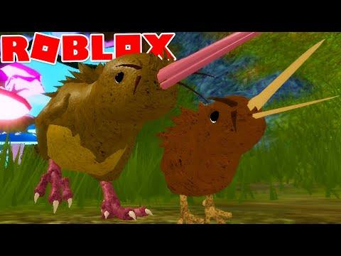 VIDA DE KIWI - NOVO ANIMAL e NOVO MAPA! - ROBLOX Feather Family | *Para Crianças* 🥝