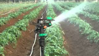 Sprinkler Impact Rotor di Kebun
