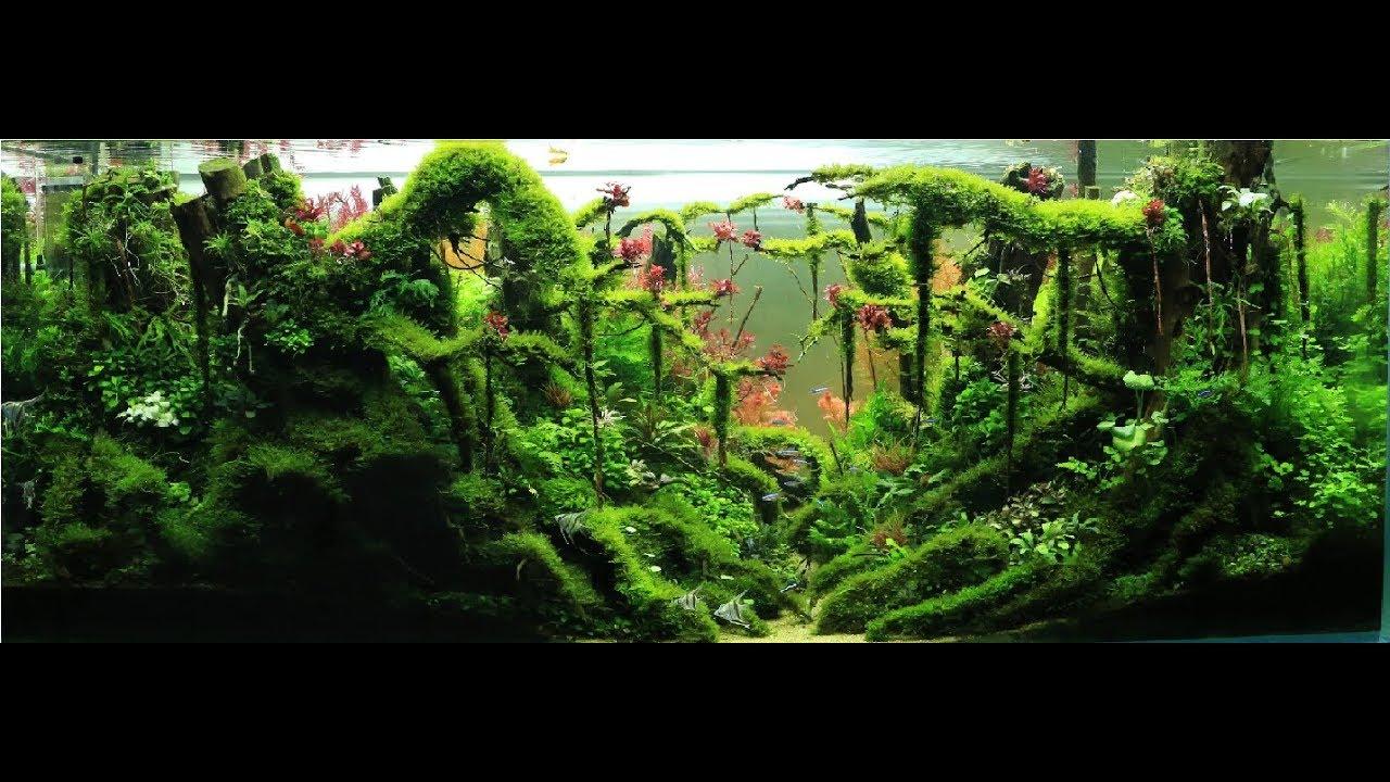 How to set up a Jungle Aquascape 325l ( Part2 ) - YouTube