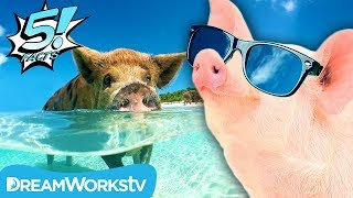 5 Facts About PIGS That Will Make You Squeal | 5 FACTS