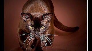 Прикол кот танцор(Приколы ютуба!Все самые лучшие и смешные видео ролики на ютубе.Все видео самые короткие,короче уже не будет...., 2015-04-28T12:49:20.000Z)