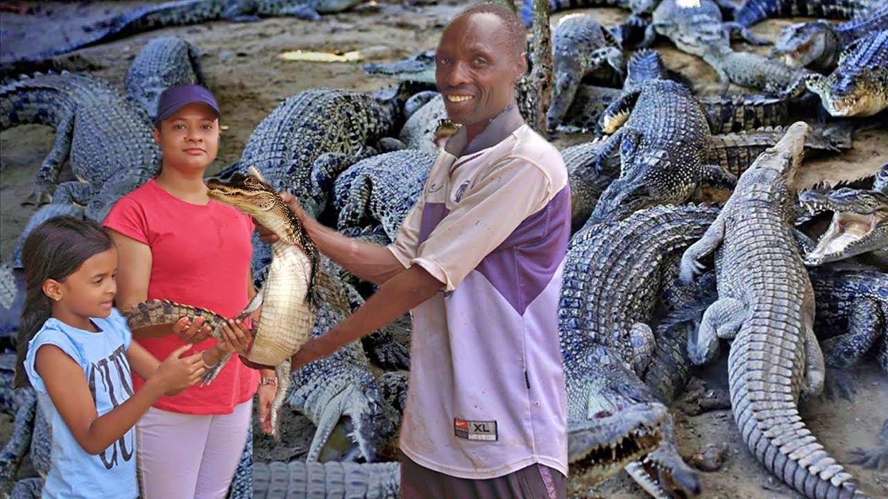 വീട്ടിൽ മുതല കൃഷിയോ ? Crocodile Farm | Malayalam Travel video |