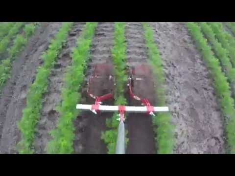 Terrateck - Double Wheel weeder hoe on carrot's