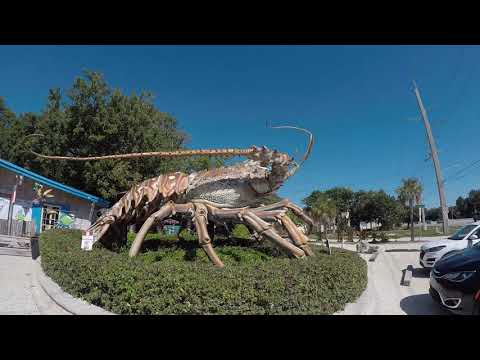Key Largo Florida Fishing Spots From Shore