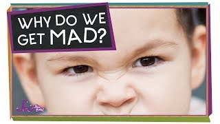 Why Do We Get Mad?