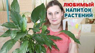 ЕСЛИ ЖЕЛТЕЮТ и СОХНУТ КОНЧИКИ ЛИСТЬЕВ.  Супер подкормка для роста всех комнатных растений!