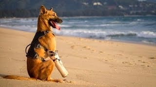 Dog Gets Prosthetics After Neighbor Horrifically Slashed His Legs With A Sword