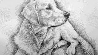 How to Draw a Dog! (Golden Retriever)