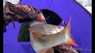 О ТАКОЙ РЫБАЛКЕ В ГЛУХОЗИМЬЕ МОЖНО МЕЧТАТЬ!!!Крупная плотва,язь,окунь.Рыбалка 2020, безмотылка.