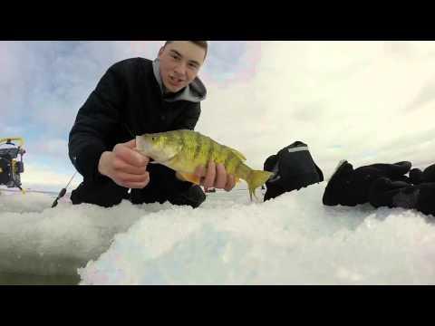 Ice Fishing Perch on Shoal Lake