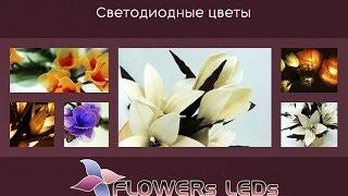 FLOWERsLEDs - Лучшие светодиодные цветы и гирлянды ПРОМО SV(Описание преимуществ нашей продукции., 2014-11-15T06:20:13.000Z)