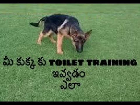 How to potty train your Dog and Puppy in Telugu | Taju logics