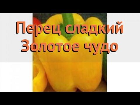 Перец сладкий Золотое чудо (zolotoe chudo) 🌿 обзор: как сажать, семена перца Золотое чудо | сладкий | золотое | перец | обзор | чудо | zolotoe | chudo | zolo