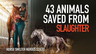 Horse Shelter Heroes | S2E12 | Full Episode