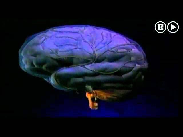 ¿Qué le hace la música a nuestro cerebro?