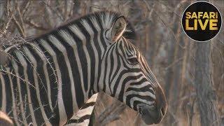 safariLIVE- Sunset Safari - September 27, 2018- Part 2 thumbnail
