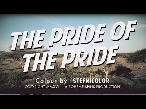 Pride of the Pride - Northern Tanzania 2015