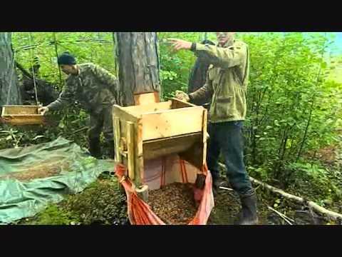 Мужики в лесу видео