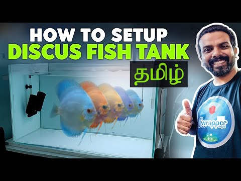 TAMIL Version - How To Setup Up A Discus Fish Tank | #151 Video