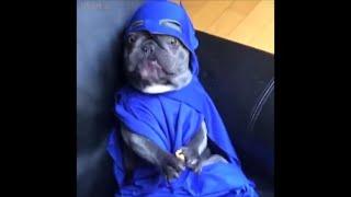 Best Animals Fails Februar 2019 Compilation - Funny Animals Videos