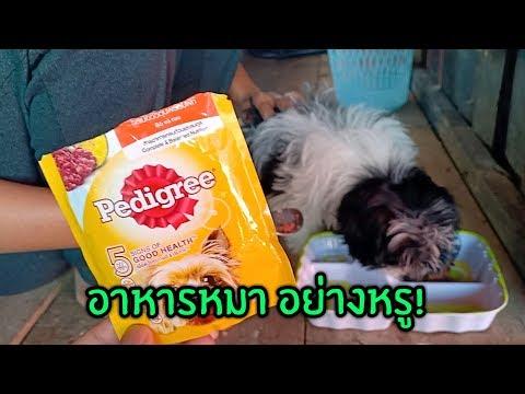อาหารหมาอย่างหรู! กิน Pedigree