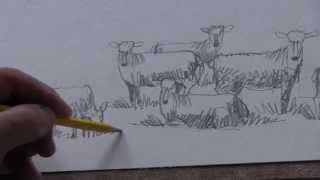 Drawing sheep - a teaching video with Alek Krylow