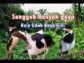 Jalak Suren Unik  Mp3 - Mp4 Download
