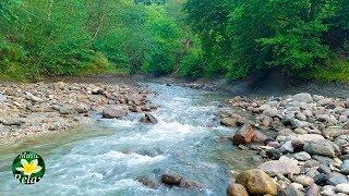 Нежный звук горной реки и весеннего леса