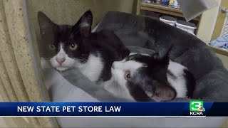 Pet stores can only sell rescued dogs, cats and rabbits under new CA law