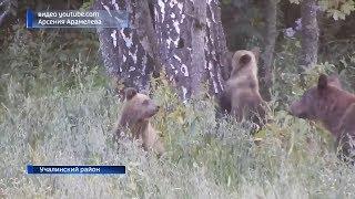 В Башкирии сняли на видео трапезу семейства бурых медведей