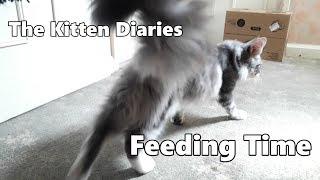 The Kitten Diaries - Feeding Time!