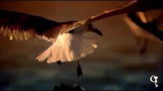 [K-a-t-y] Siente Mi Amor - Salma Hayek - Lyrics - Eng sub