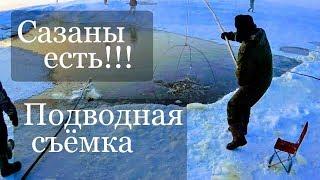 Рыбалка на подъЁмник паук зимой вместе с Сибирским Странником. Сазан зимой на морковку.