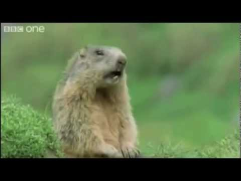 Talking Animals - Walk On The Wild Side BBC one