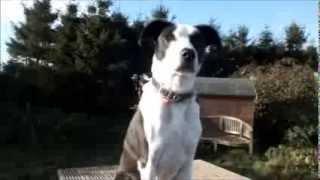 Dogs Trust Leeds: Angus