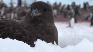 Antarctica with Filmmaker Anthony Powell