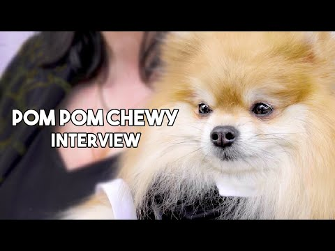 Meet Pom Pom Chewy, the smallest and cutest Star of the Sloppy Jones Show!