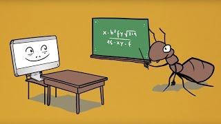 Für was wird der Ameisenalgorithmus verwendet?
