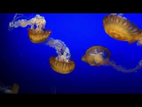 Henry Doorly Zoo and Aquarium 2015