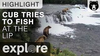 Bear Cub Attempts to Fish - Brown Bears Live Cam Highlight 07/11/17