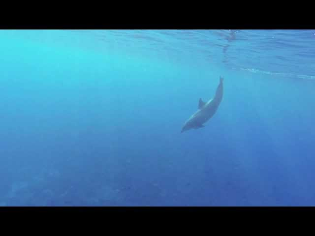 GoPro: Swimming with Dolphins in Maldives