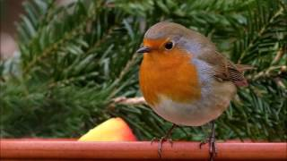 relaxing birdsong screenshot 4