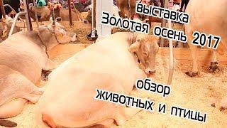 Агропромышленная выставка Золотая осень 2017 (Москва, ВДНХ)