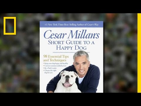 Cesar Millan's Tips For A Happy Dog | National Geographic