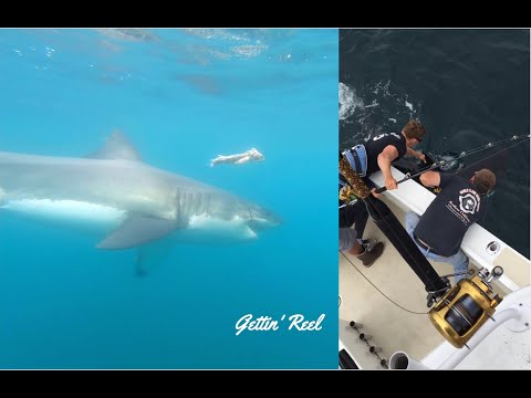 Catching A Great White Shark (by Accident)