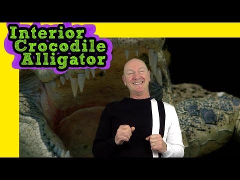 Interior Crocodile Alligator I Drive A Chevrolet Movie Theatre