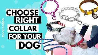 How to choose right COLLAR for your dog. Pros and Cons EXPLAINED.