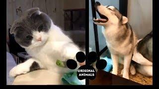 Original Animals #13. CUTE AND FUNNY ANIMALS VIDEO/ МИЛЫЕ И СМЕШНЫЕ ЖИВОТНЫЕ.