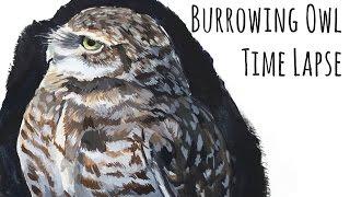 Burrowing Owl Time Lapse